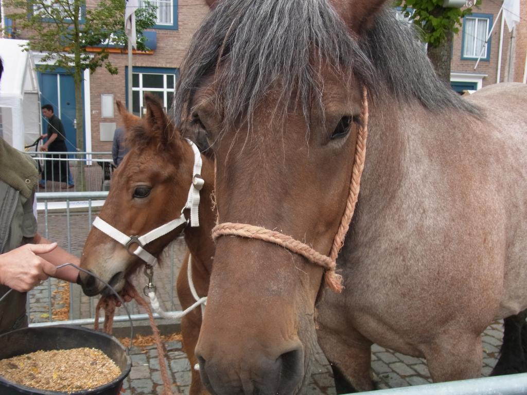 IJzendijkse Paardenvierdaagse